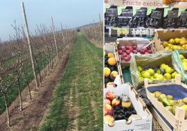 Adio, fructe! Frigul şi îngheţurile târzii au compromis recoltele de fructe de anul acesta din Bihor