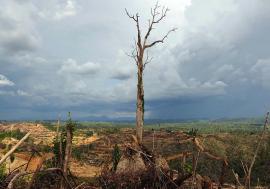 Pandemia de COVID-19, mesaj de la natură: 'Civilizaţia de azi se joacă cu focul'