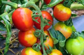 Plantele vorbesc! Descoperire importantă făcută de un grup de cercetători de la Universitatea din Tel Aviv