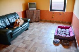 Hotelul veseliei: S-a deschis Hotel Happy Dog, primul hotel de lux din Bihor dedicat celor mai buni prieteni ai omului (FOTO)