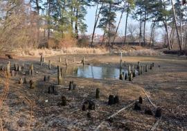 Rezervaţia amintirilor: Rezervaţia Peţea a murit, melcul termal a dispărut, urmează Băile Felix?