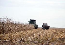 S-a făcut mălaiul! Fermierii bihoreni au parte de cea mai mare producţie de porumb din istorie