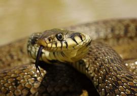 Am un şarpe, ce mă fac? O orădeancă a găsit un şarpe pe terasă şi a alertat autorităţile, dar i s-a spus să… se descurce