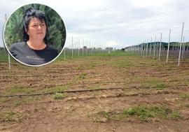 Livada cu ţepe: Cum a ajuns o firmă din Bihor să fie păgubită prin neglijenţa autorităţilor şi şmecheria unui topograf samsar de terenuri