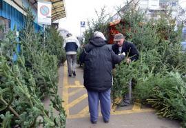 O brad frumos!  Poliţia a confiscat peste 9.500 de brazi de Crăciun tăiaţi ilegal