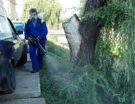 Atac la ţânţari. Joi începe cea de-a şaptea etapă de dezinsecţie în Oradea