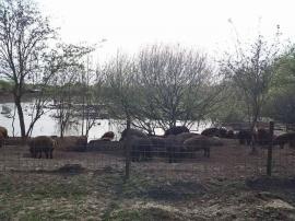 Invitaţie cu duhori, de 1 Mai, la Cefa: Porcărie în loc de pescărie!