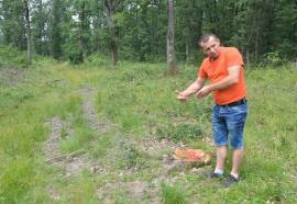 Matematică de pădure: Pădurarul care şi-a denunţat şeful, 'amendat' cu… 80.000 lei
