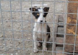 Târg caritabil, pentru animalele fără stăpân
