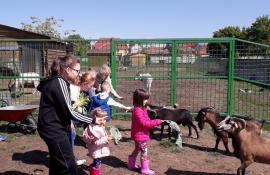 ADP Oradea: Se suspendă accesul publicului la Zoo şi la Adăpostul Grivei