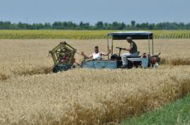An bun! Agricultorii bihoreni au obţinut producţii peste media naţională