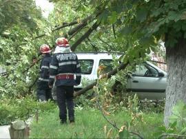 Vijelie păguboasă: Un copac a căzut peste două maşini parcate în Oradea, alţi doi arbori au blocat trotuarele şi o pistă de biciclete