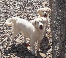Adoptă un câine fără stăpân!