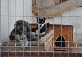 Câinii discordiei: Primăria Sânmartin şi-a ridicat în cap iubitorii de câini