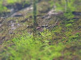 Fotografii rare: O capră neagră, surprinsă în Parcul Natural Apuseni (FOTO)