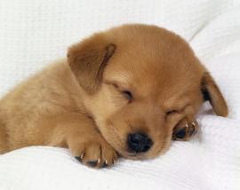 ADP susține adopția câinilor fără stăpân