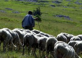 Muncitori români, exploataţi la ferme din Italia. Cum i-a ajutat ambasadorul României, bihoreanul George Bologan