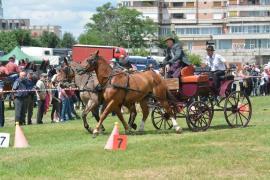 Concurs de atelaje, desfășurat în premieră la Oradea, în cadrul Zilelor Sfântului Ladislau (FOTO/VIDEO)