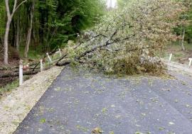 Copacii de pe marginea drumurilor naţionale din Bihor vor fi toaletaţi, pentru evitarea accidentelor