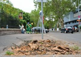 """USR pune tunurile pe Primăria Oradea: """"Capitala Verde a României"""" nu-şi merită numele din cauza tăierilor de copaci"""