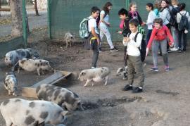 Zoo Oradea, o atracţie în cadrul Săptămânii Altfel: Peste 1.300 de elevi în vizită (FOTO)