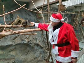 Moș Crăciun a hrănit animalele de la Zoo Oradea (FOTO)
