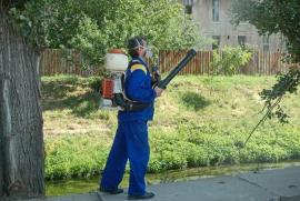 Țânțarii, bată-i vina! Primăria Oradea demarează noi lucrări de dezinsecție în spațiile publice