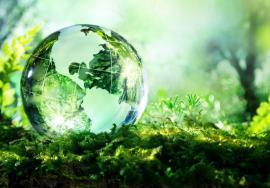 Zile 'verzi' în Oradea: Ecotop organizează un festival ecologist