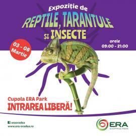 Cea mai mare expoziţie mobilă de tarantule, insecte şi reptile vii, la ERA Park Oradea!