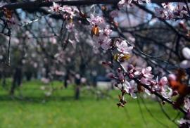 Echinocţiul de primăvară. Din 21 martie, ziua va fi tot mai lungă