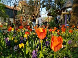 Grădină spectaculoasă, în mijlocul oraşului. Parcul Libertăţii e plin de flori! (FOTO)