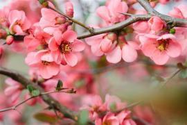 Tradiţii şi obiceiuri în ziua de Florii: De ce nu trebuie să te speli pe cap în această sărbătoare