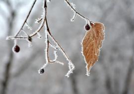 Vremea până pe 26 noiembrie: Zilele vor fi din ce în ce mai reci