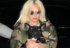 Câinii lui Lady Gaga au fost furaţi, iar bărbatul care îi plimba a fost împuşcat. Artista oferă o recompensă uriaşă