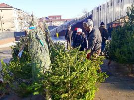 ADP Oradea scoate la licitație locurile pentru comercializarea brazilor de Crăciun