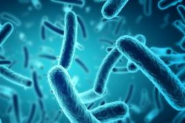 Listerioza: Cum se manifestă și cum se transmite această boală
