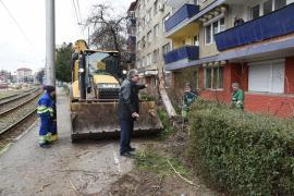Tăierile de arbori impuse de modernizarea Bulevardului Nufărul-Cantemir din Oradea stârnesc revolta riveranilor (FOTO / VIDEO)