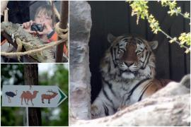 Grădina Zoologică din Oradea se mută în pădurea din Băile Felix
