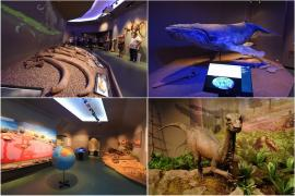 O balenă, un schelet de mamut și dinozauri descoperiți în Bihor, în expoziție la noua secţie de Ştiinţe ale Naturii din Muzeul Ţării Crişurilor (FOTO / VIDEO)