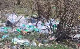 O pădure din Bihor, groapă de gunoi pentru unii. Primarul spune că se aruncă atât de multe deşeuri încât nu reuşeşte să le cureţe (VIDEO)