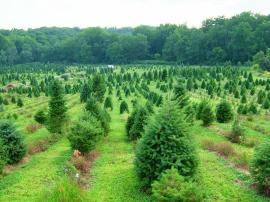 APIA Bihor: Se pot depune cereri de fonduri pentru crearea de suprafețe împădurite