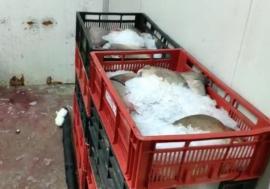 Ministrul internelor despre cele 30 de tone de peşte confiscat: Era contaminat cu mercur şi braconat din ape poluate