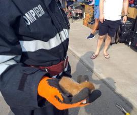 Salvatori pe viaţă: Pompierii militari au adoptat doi pui de pisică pe care i-au scăpat de primejdii (FOTO)