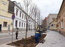 Bihorel: Tigrul platanului a sfâșiat deja niște locatari de pe strada Aurel Lazăr