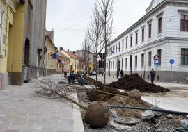 Fără platani! Locuitorii străzii Aurel Lazăr cer Primăriei Oradea să înlocuiască toţi copacii plantaţi