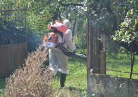 Focarele de pestă porcină africană s-au împuţinat în Bihor: mai sunt doar 3 la porcii domestici şi 7 la mistreţi