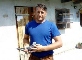 Campionatul porumbeilor voiajori: Geczi Mehesz Levente câştigă etapa de viteză Presov