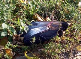 Scene sumbre: Zeci de porumbei morţi, în parcurile şi scuarurile din Oradea (FOTO)