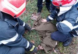 Eroi şi pentru necuvântătoare: Pompierii bihoreni au salvat doi pui de căprioară şi o viţea