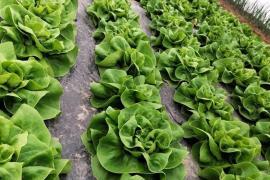 Cumpăraţi din Bihor! Primăriile bihorene promovează producătorii locali